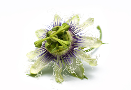Passion fruit flower on white