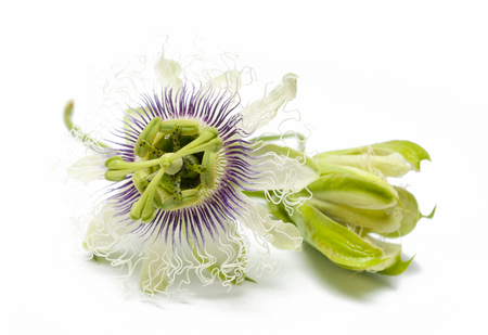 Passion fruit flowers on white