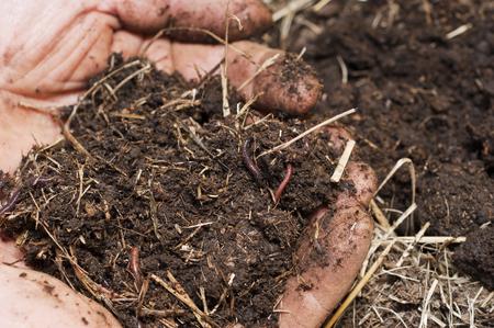 Boden und Würmer von einer Wurmfarm in bäuerlichen Händen Standard-Bild - 106640851