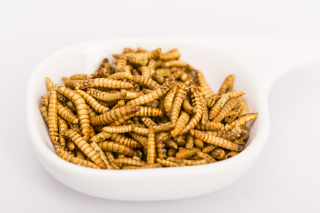 Fried insect, Molitors, Food of the future