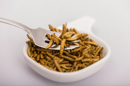 the larvae: Fried insect, Molitors, Food of the future