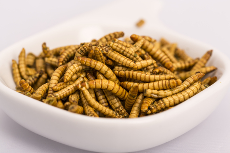 mealworm: Fried insect, Molitors, Food of the future