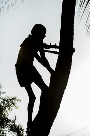 coconut seedlings: Old poor professional climber on coconut tree-gathering coconuts with rope Stock Photo