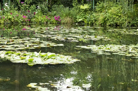 floating on water: summer river lake with floating water  lily France Stock Photo