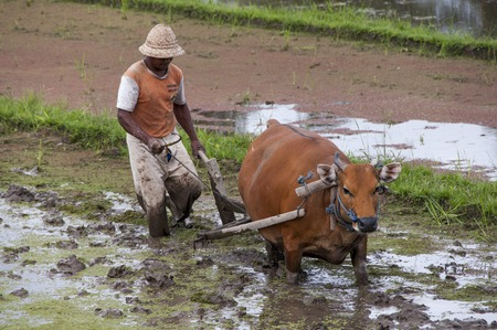 polution: Earth international day - April 22 2016. Environment polution. Traditional farmer with bullock cart