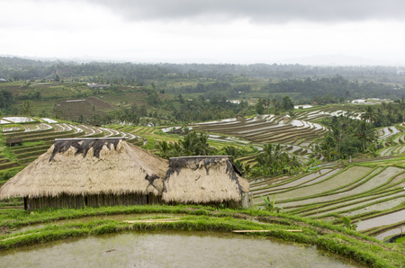 terraced field: Terraced Rice Field in Bali. Organic farming. Earth international day - April 22 2016. Environmental protection planet
