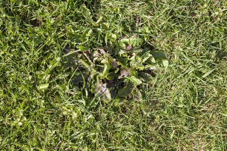 pests: Pests parasite grass garden nature green gardening Stock Photo