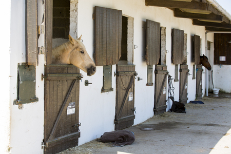 Brown pony horse indoor looking white wall wood door