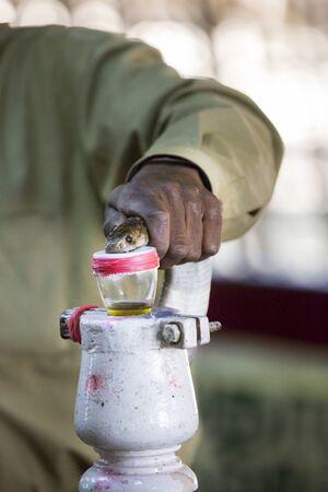 risky job: Milking snake cobra for venom poison India Tamil Nadu