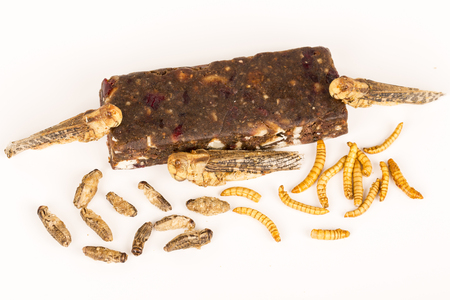 energy bar: Fried crickets locust molitor insects, cereal energy bar made with insects powder, food of future rich protein France
