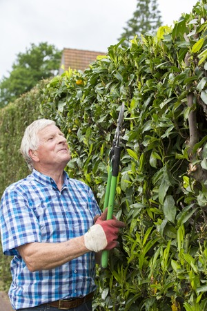 senior man cutting hedge in garden France Stock Photo