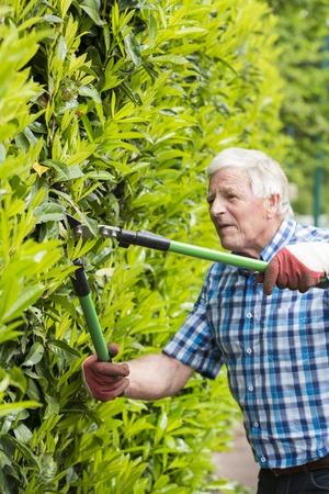 senior man cutting hedge in garden France Stock Photo
