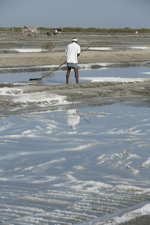manual job: Documentary image editorial. Pondicherry, Tamil Nadu, India - July 05 2014. Poor workers picking up, collecting the sald, in big field, manual labour, organic agriculture, very hard job