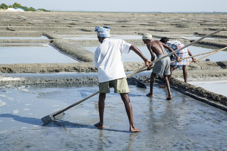 desalination: Documentary image editorial. Pondicherry, Tamil Nadu, India - July 05 2014. Poor workers picking up, collecting the sald, in big field, manual labour, organic agriculture, very hard job