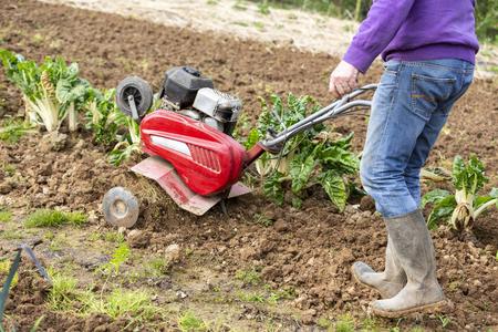 senior farmer gardener working in the garden with rototiller , tiller tractor, cutivator, miiling machine. Permaculture Stock Photo