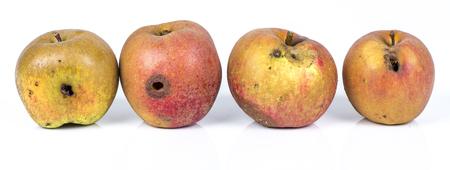 Four Worm Apple Maggot Larva Eating Apple damaged on White Background