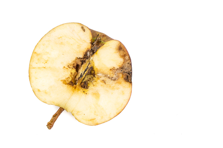 Close-up Boring trace of a codling moth Cydia Pomonella, in a half wormy apple. On white background. Place to write