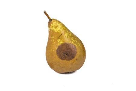 Boring trace of a codling moth Cydia Pomonella, in a wormy pear. scab, oidium, Monilia fructigena. On white background. Place to write