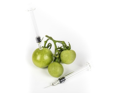 Small green tomatoes grape with syringe. Concept non organic food, genetically modified organism. On white background. Place to write