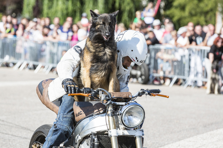LE TRAIT, SEINE MARITIME, NORMANDY, FRANCE - SEPEMBER 01, 2018. Moto-show in central square of city. Tricks on ATV stuntmen, Stunt Riding - Wheelie, Stoppie and extreme acrobatics somersault on motorbike with a dog Tervueren Belgian Shepherd sitting on th