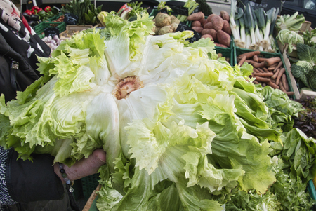Green vegetables salad escarole endive in woman hand at a grocery market. Female chooses healthy food Archivio Fotografico