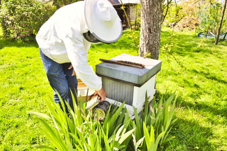 Commercial beekeeper at Work, Cleaning and Inspecting hive, looking for dead brood removal. Authentic scene of life in nature. Hive management