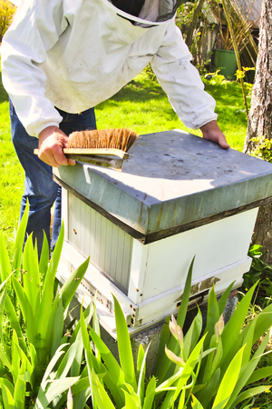 Commercial beekeeper at Work, Cleaning and Inspecting hive, looking for dead brood removal. Authentic scene of life in nature. Hive management 스톡 콘텐츠