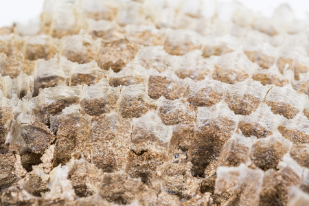 Close up of asian hornet wasp nest honeycombed insect macro. Poisonous venom animal colony. Concept of danger in nature