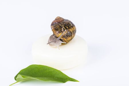 White soap cosmetics on green leaf, made with snail slime. Very healthy and organic products. Stock Photo