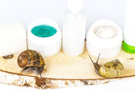Cosmetics organic made with slaver of snail, very good for skin and health and fashion in Europe. Pot of cream, gel, shampoo, soap, pills and snail around or on the products. Lifestyle beauty treatment