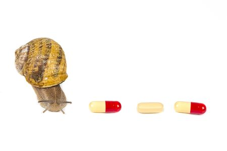Big brown snail alive with medicine on white background. Concept new medicine with natural organic animals