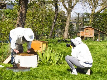 Photographer taking pictures of apiarist in garden, with bees flying around the beekeeper. Authentic scene of apiculture life Stockfoto
