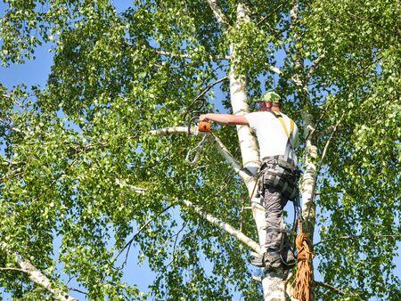 Close-up volwassen professionele mannelijke boomtrimmer hoog in de top van berkenboom die takken snijdt met een gasaangedreven kettingzaag en bevestigd met hoofddeksels voor veilig werk. Expert om gevaarlijk werk te doen. Stockfoto