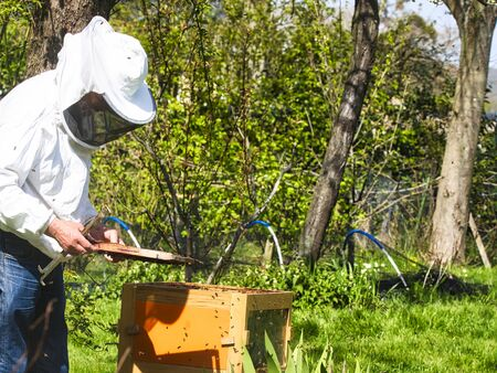 Photographer taking pictures of apiarist in garden, with bees flying around the beekeeper. Authentic scene of apiculture life