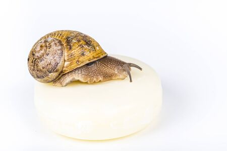 White soap cosmetics made with snail slime on white background, with snail alive, moving on small piece wood. Very healthy and organic products.