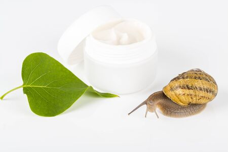 Cosmetics organic made with slaver of snail, very good for skin and health and fashion in Europe. Pot of cream, gel, shampoo, with green leaf and snail around or on the products. Lifestyle beauty treatment