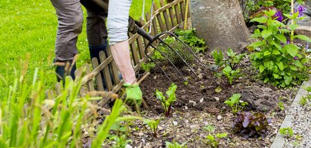 Mature woman hand with gloves taking out weeds plants from earth. Authentic gardening scene in spring time.