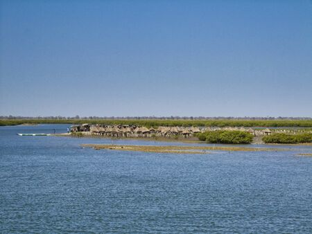 Mangroves in Senegal, great place for tourists to visit by boat. Africa
