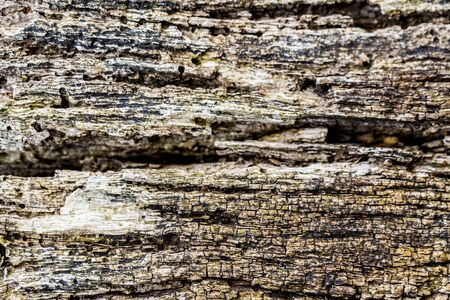Background very old textured crack wood with lines. Graphic ressource