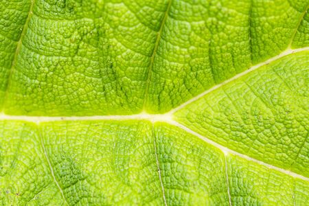 Background green textured vibrant color leaf. Graphic ressource