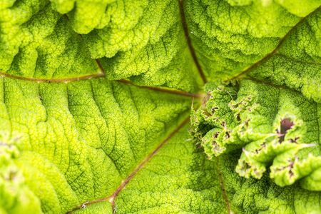 Background green textured vibrant color leaf. Graphic ressource Banque d'images