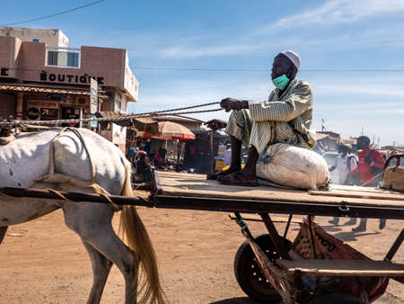 MBOUR, SENEGAL - DECEMBER Circa, 2020. Ox-cart driver wearing face mask protection, sitting on rice bag, in the city in Senegal, Africa