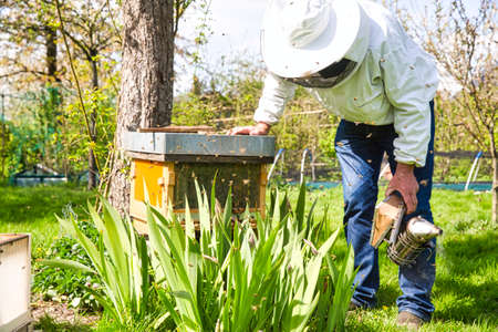 The beekeeper looks at the bee in box in the apiary. Extracting honey from the behive. To hive a swarm, to make increase from a colony, make up a nucleus, rearing, rotating brood, to run a bee-yard, to split a hive, checking the spring build-up. Authentic scene rural life