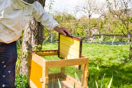 Horizontal photo of a beekeeper in white protection suit and denim standing behind a beehive with frame grip tool and an empty frame in hands. Authentic scene of beekeeping