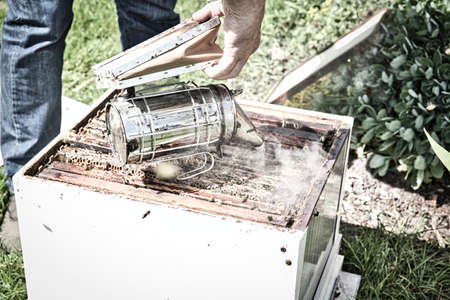 A bee hive box being smoked to calm the worker bees and encourage them to move away from the open hive, allowing a beekeeper to inspect the hive for parasites. Open the hive with frame grop holder tool