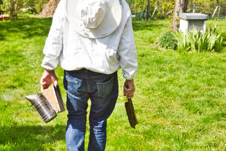 beekeeper walking and inspecting his row of beehives near blossoming field. Authentic scene of life