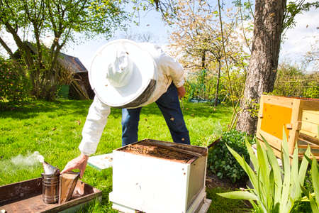 Beekeeper on apiary. Beekeeper is working with bees and beehives on the apiary. To restack a hive, to sample a colony of varroa, to shift the genetics of a colony. Authentic scene of life in garden Imagens