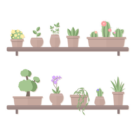 Vector illustration of set of plants in pots standing on shelves isolated on white background