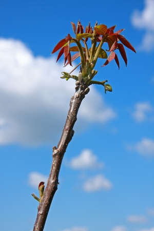 Blooming branch in spring