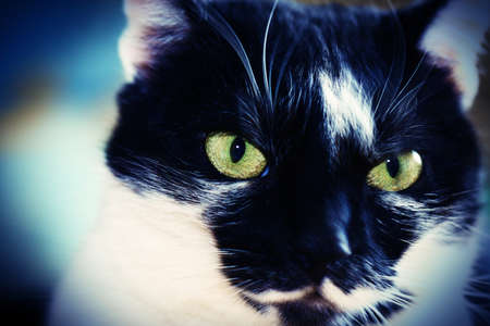 Portrait of a black and white cat Stock Photo - 9657108